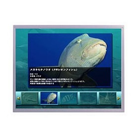"Dalle LCD TFT 15.0"", XGA, 1024 x 768 pixels : AA150XT01"