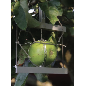 Dendromètre fruit et légumes : DF2- DF3